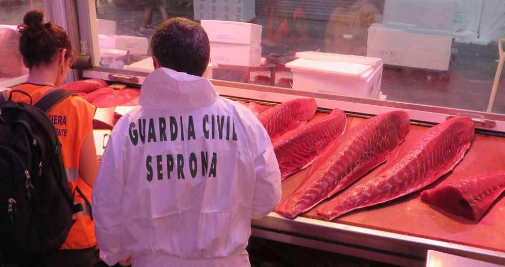 atún rojo de calidad